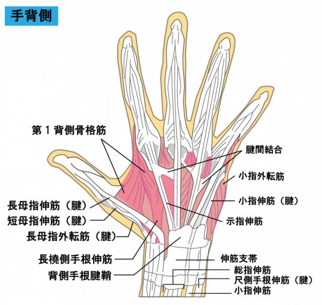 ばね指の説明イラスト